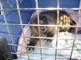 marmot 7 compact