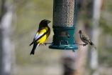 Birdies at JRR