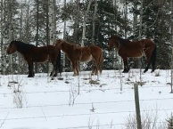 Wild Horses at top of our entry road on Mar 29 2018. Thanks Gary and Sarah for the Photo!
